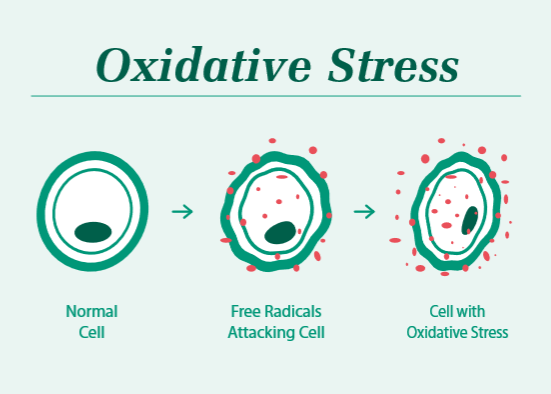 Cos'è lo stress ossidativo